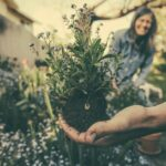 Gardener who uses herbal standards for crop protection